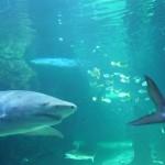 Im Sydney Aquarium