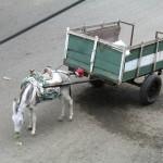 Umweltfreundlicher Warentransporter