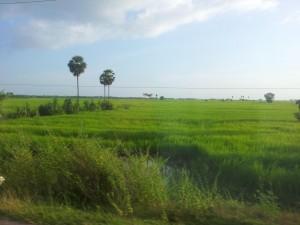 Kurz hinter der Grenze strahlen die ersten Reisfelder in der Mittagsonne. Zweiter Eindruck: Nice.